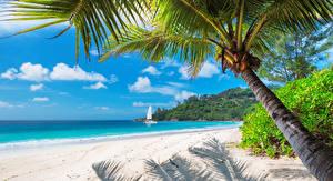 Bilder Tropen Küste Sand Palmengewächse Strand Natur