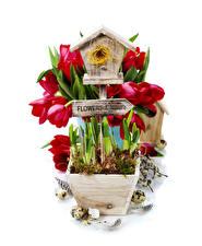 Bilder Tulpen Federn Weißer hintergrund Nest Eier Blumen