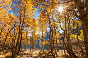 Hintergrundbilder USA Herbst See Kalifornien Bäume Lichtstrahl June Lake Natur