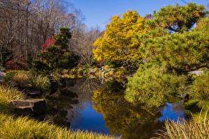 Picture USA Autumn Parks Pond Trees Spruce Gibbs Gardens Nature