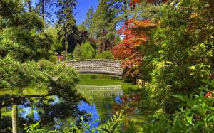 Bilder Vereinigte Staaten Garten Teich Brücken Washington Fichten Design Spokane Japanese Garden Natur