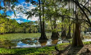 Fotos USA See Wälder Texas Bäume Caddo Lake Natur