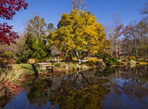 Bilder USA Park Herbst Teich Bäume Gibbs Gardens Natur