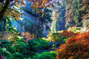 Bilder Vereinigte Staaten Park Herbst Strauch Bäume Portland Oregon Natur