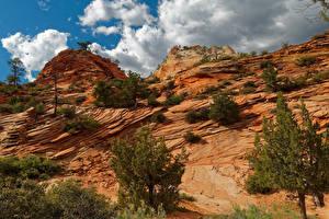 Fotos Zion-Nationalpark Vereinigte Staaten Park Gebirge Bäume Natur