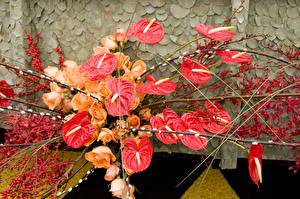 Photo Anthurium Roses Berry Branches Flowers