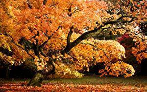 Bilder Herbst Vereinigtes Königreich Park Bäume Blatt Westonbirt Arboretum Natur