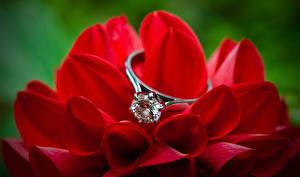 Hintergrundbilder Brillant Dahlien Ring