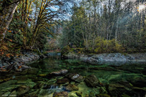 Bilder Kanada Wälder Flusse Steine Laubmoose Lichtstrahl Little Nitinat River Natur