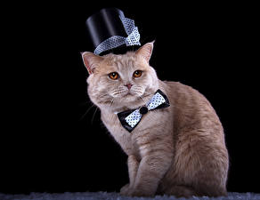 Pictures Cat Black background Hat Bow tie Staring Animals