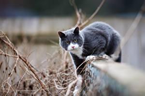 Fotos Katzen Graue Tiere