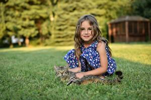 Fotos Hauskatze Kleine Mädchen Gras Blick Ivan Niznicki kind