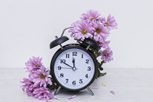 Image Chrysanthemums Clock Pink color flower