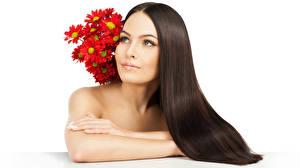 Fotos Chrysanthemen Weißer hintergrund Braune Haare Blick Hand Haar Mädchens