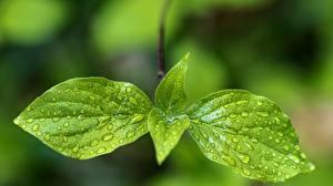 Wallpapers Closeup Leaf Drops Green