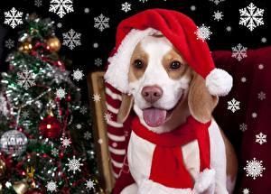 Image Dogs Christmas Beagle Snowflakes Tongue Glance Animals