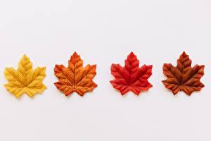 Bilder Blattwerk Ahorne Grauer Hintergrund Gelb Rot Orange Braunes