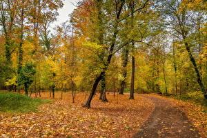 Bilder Deutschland Herbst Park Bäume Blatt Karlsruhe
