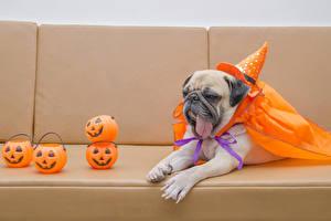 Fotos Feiertage Halloween Hunde Kürbisse Mops (Hunderasse) Der Hut Zunge