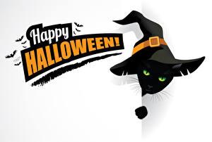 Bilder Feiertage Halloween Vektorgrafik Katze Vögel Weißer hintergrund Englisch Der Hut Tiere