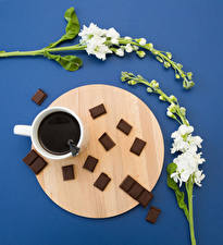Wallpaper Matthiola Coffee Chocolate Colored background Cup Flowers