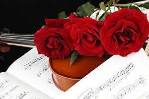Bilder Noten Rosen Drei 3 Rot