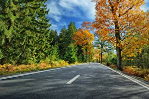 Fotos Wege Herbst Asphalt Natur