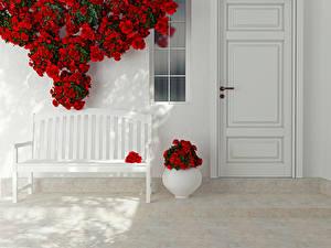 Bilder Rosen Bank (Möbel) Vase Rot Tür Design Blumen