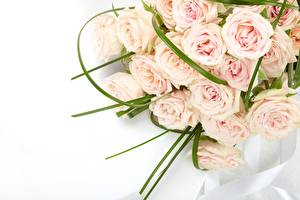 Pictures Rose Bouquet Pink color flower