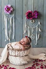 Bilder Rose Traumfänger Bretter Wände Säugling Schlafendes Blütenblätter kind