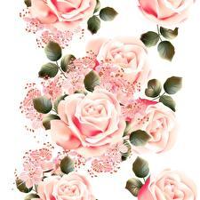 Bilder Rosen Rosa Farbe Weißer hintergrund