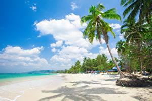 Bilder Tropen Strand Palmen Bäume Natur