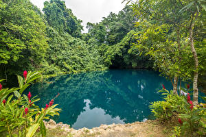 Hintergrundbilder Tropen Park See Bäume Vanuatu Natur