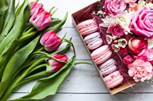 Bilder Tulpen Macaron Blumen