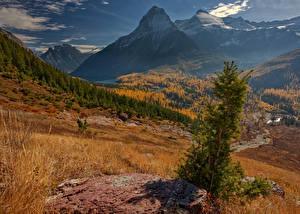 Fotos Vereinigte Staaten Herbst Park Gebirge Landschaftsfotografie Wälder Gras Glacier National Park Natur