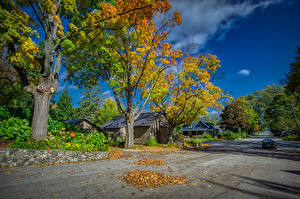 Photo USA Houses Roads Autumn Street Trees Leaf Northport Michigan Cities