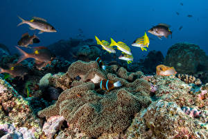 Wallpapers Underwater world Corals Fish