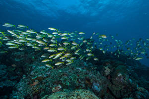 Wallpapers Underwater world Corals Fish Many