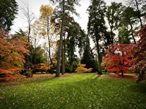 Bilder Vereinigtes Königreich Park Herbst Bäume Gras Westonbirt Arboretum Natur