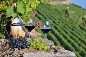 Bilder Wein Weintraube Rebberg Flaschen Weinglas Zwei Lebensmittel