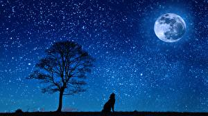 Wallpapers Wolves Night Moon Trees Silhouette