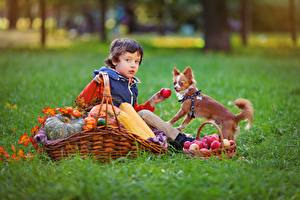 壁纸,,秋季,苹果,犬,籃,草,男孩,坐,儿童