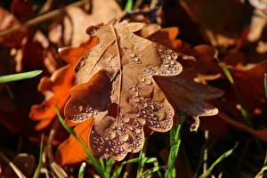 Hintergrundbilder Herbst Großansicht Blattwerk Tropfen Acorn Natur