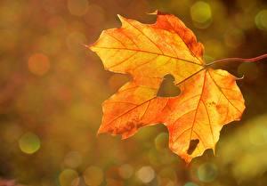 Image Autumn Closeup Leaf Maple Heart