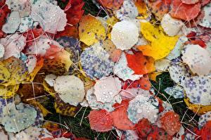 Fotos Herbst Großansicht Blattwerk Mehrfarbige Tropfen Natur