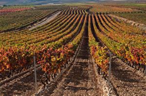 Hintergrundbilder Herbst Felder Rebberg Strauch