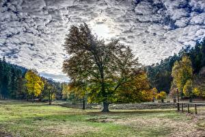 Pictures Autumn Forests Trees Clouds HDR Nature