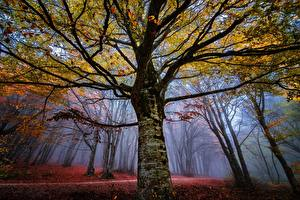 Images Autumn Forests Trees Fog Branches Trunk tree Nature