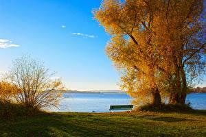 Bilder Herbst See Bäume Gras Bank (Möbel) Natur