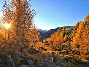 Bilder Herbst Gebirge Hunde Steine Landschaftsfotografie Bäume Lichtstrahl